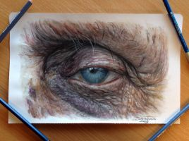 Old Eye Color Pencil Drawing by AtomiccircuS