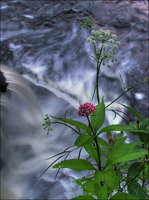 Fall of the Wild Flower by wb-skinner