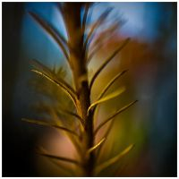 Colour of Life XI by GreenEyedHarpy
