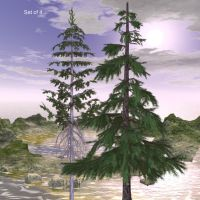 Alpines and Fir Trees by oldhippieart