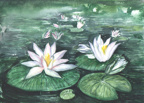 Water lilies by Ephaistien