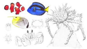 Fish and Crabs Sketches by JEnilorac