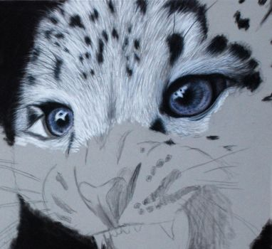 Snow leopard cubs wip2 by Sassis