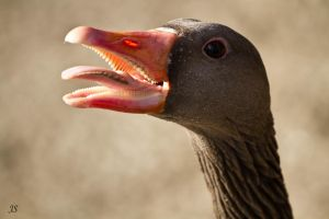 Angry Goose by JS2010