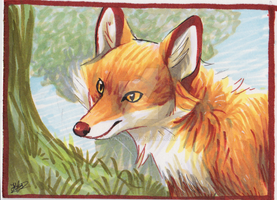 ACEO Red Fox by Avanii