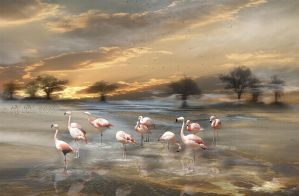 Flamingos by ladyjudina