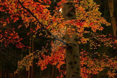 Colors of Autumn by CliveAnthony
