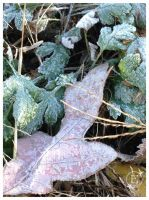 Fallen And Frosted death of foliage by EsBest