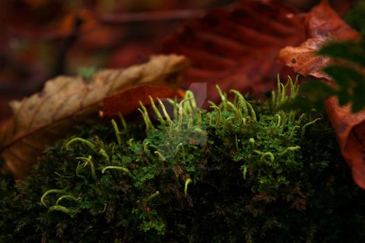 Moss and Lichen by CliveAnthony