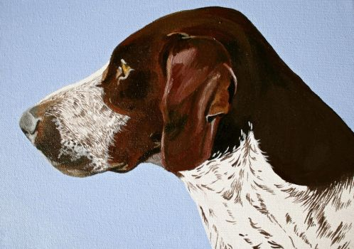 German Pointer by buffywolf