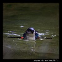 Swimming Penguin II by TVD-Photography