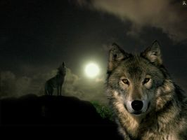 Wolves by PhantomSavage