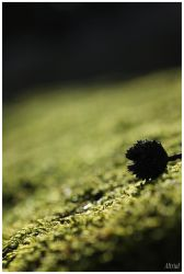 moss by Altrial
