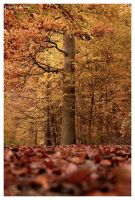 autumn by things-i-see