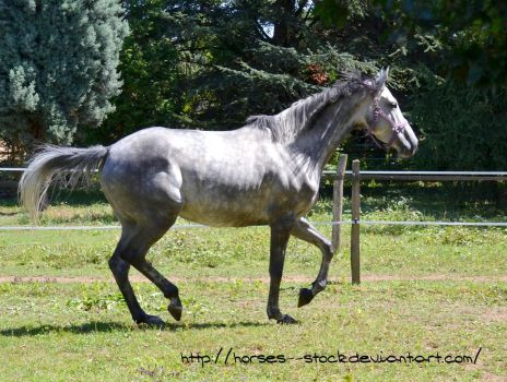 Calabria - Stock 5 by Horses--Stock