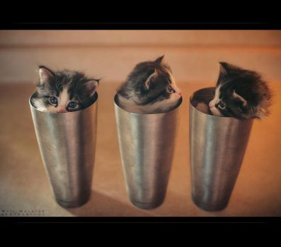 Cup of Kittens by MRBee30
