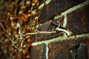 Rusted Nail by jnicolini12