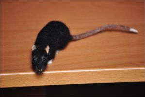 Needlefelted Rat - Brackle by nikkiburr