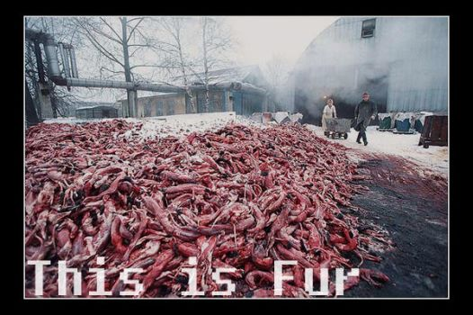 This is fur by Bingham