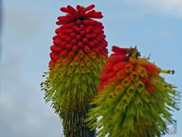 Red And Yellow Strange Plant by wolfwings1