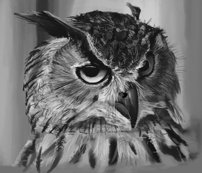 Well Owl Be Damned by KarachiIdiot