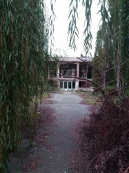 Weeping Willow by DarthTepes