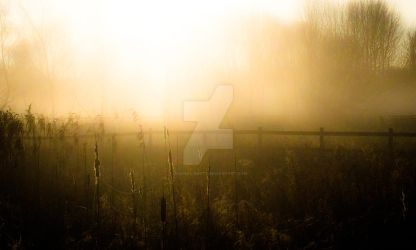 RSPB Middleton mists 5 by graphic-rusty