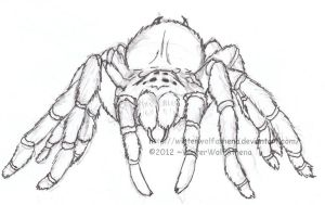 Mexican Redknee tarantula Uncoloured by WildloreCreatures
