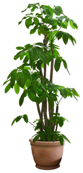 plant png 11 by DIGITALWIDERESOURCE