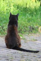 Cat Stock 35 by Malleni-Stock
