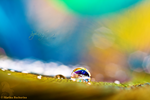 Splash of Colour by Gryphonia