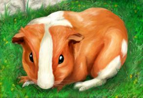 Guineapig - Ginger by Risachantag