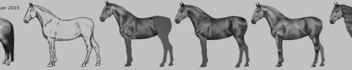 Development of the andalusian by Snoopie263