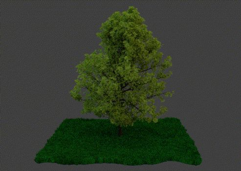 GIF: Tree and Grass by blenderenderer