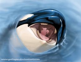 Orca by YuliaPW