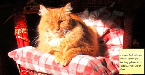 Old Cat... by cattservant