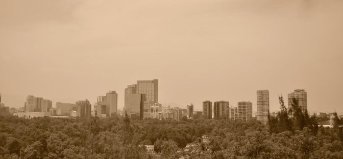 Urban Jungle by magv89