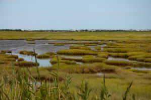Wet Lands stock 2 by FairieGoodMother
