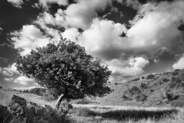 The slanting tree by Wodger