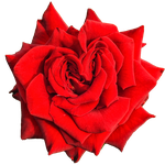 Heart Rose PNG by Bunny-with-Camera