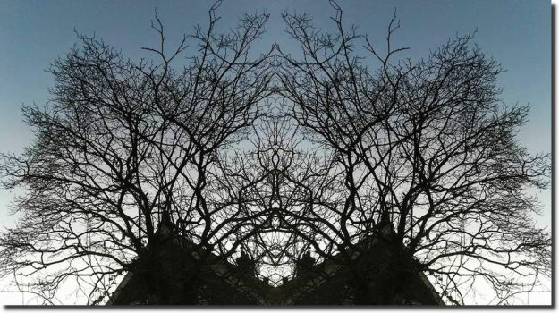 Family Tree... by ansdesign
