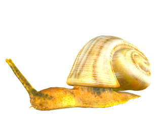 STOCK PNG snail by MaureenOlder