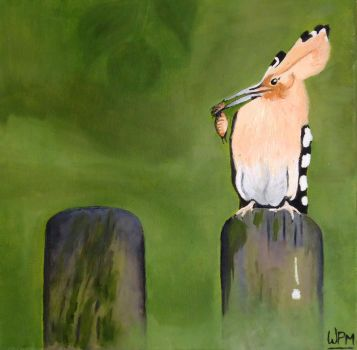 Hoopoe by WendyMitchell