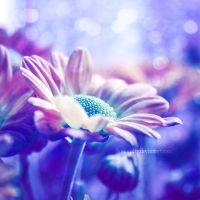 young hopeful by illusionality