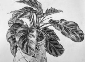 Potted Plant Study by Clayofmyclay