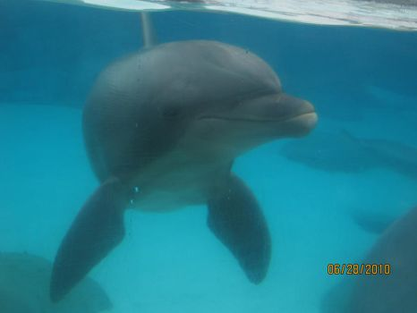Dolphin in california by doodles1234