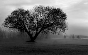 foggy morning by northernbackroads