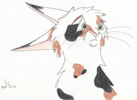 Warrior cat OC by Winter-Sky529