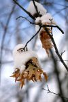 Snow Covered by cindy1701d