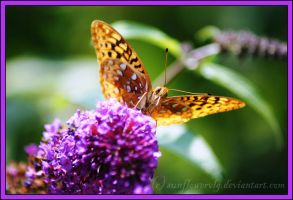 Butterfly Beauty by sunflowervlg